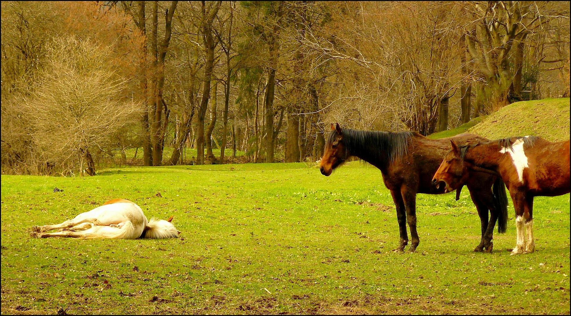 horse-271054_1920